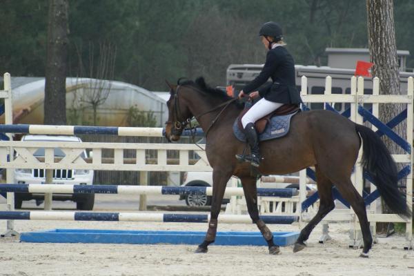 Comprar caballo une de joue silla franc s salto bayo en venta - Caballo silla frances ...