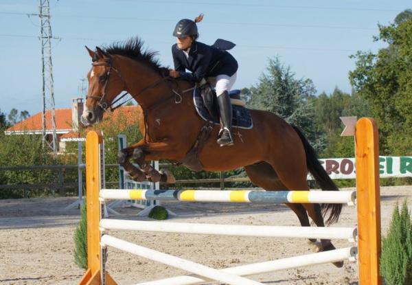 Comprar caballo j kimo du rocher silla franc s salto casta o en venta - Caballo silla frances ...
