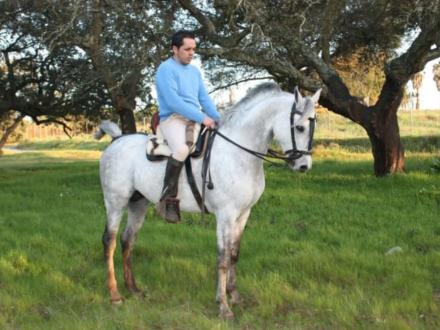 yeguada caballo arabe linea egipcia: