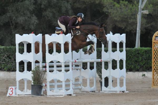 Comprar caballo dolce vita silla franc s salto casta o en venta - Caballo silla frances ...