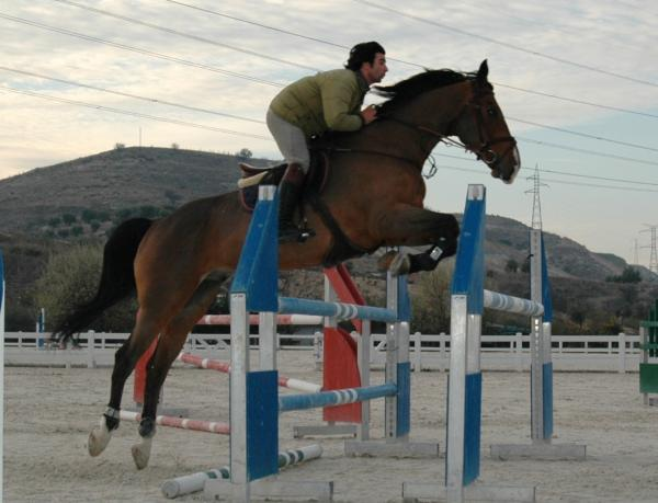 Comprar caballo orgago du marais silla franc s salto casta o en venta - Caballo silla frances ...