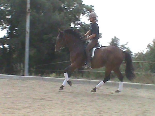Comprar caballo olimpia silla franc s doma cl sica casta o en venta - Caballo silla frances ...