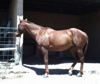 Comprar caballos | Listado de caballos en venta